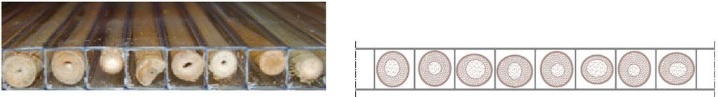 Sezione Lastre in policarbonato alveolare Polibamboo